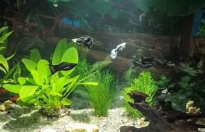 Pflanzen Im Aquarium : aquarium pflanzen d ngen ~ Michelbontemps.com Haus und Dekorationen