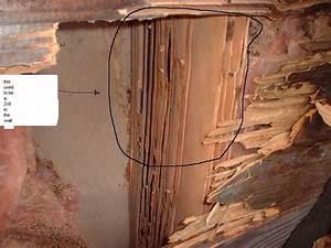 carpenter ants bathroom 28 images pest solon chagrin With carpenter ants bathroom