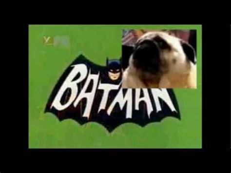pug  batman youtube