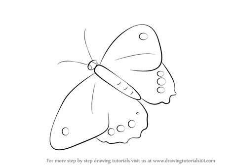 Learn How To Draw A Butterfly (insects) Step By Step
