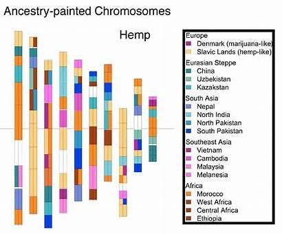 Genome Marijuana Map Cannabis Means Genetics Plant