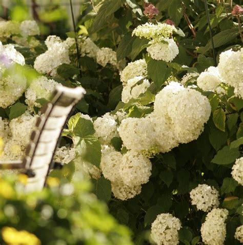 Pflaumenbaum Richtig Pflanzen Und Pflegen by Die Besten 25 Rhododendron Schneiden Ideen Auf