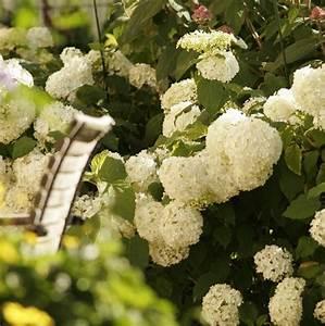 Wann Blüht Der Rhododendron : die besten 25 rhododendron schneiden ideen auf pinterest rhododendron pflanze rhododendron ~ Eleganceandgraceweddings.com Haus und Dekorationen