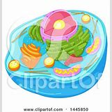 Biology Dna Clipart | 450 x 470 jpeg 45kB