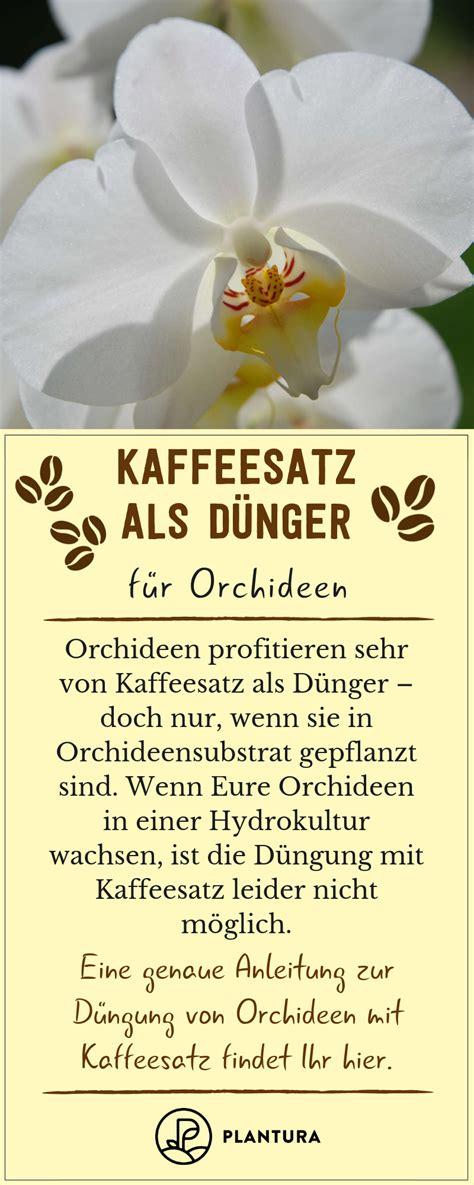kaffeesatz als dünger für orchideen kaffeesatz als d 252 nger verwendung vorteile des hausmittels blumen kaffeesatz garten