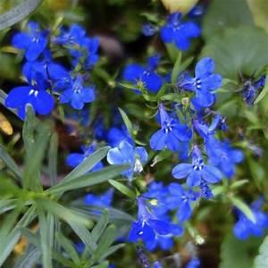 Fleur qui fleurit : liste - Ooreka