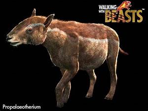 Walking with beasts Pictures/Scientific Names - Biology ...