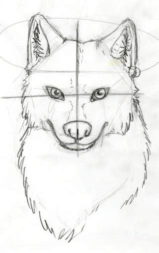 dessin de loup assis tuto comment dessiner un loup 2