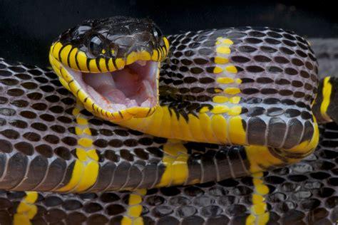Amebiasis in Reptiles - Symptoms, Causes, Diagnosis ...