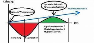 muskelaufbau riegel