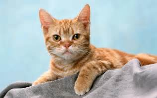 Image result for images of nice cats