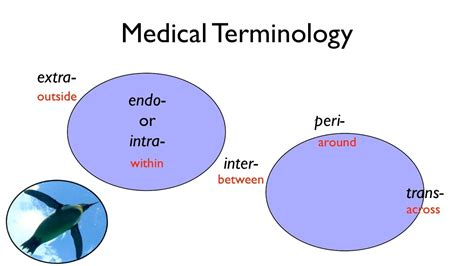 Medical Terminology  Youtube. Argos Kitchen Appliances Eset Nod32 Piratebay. Cosmetology School Rankings Aurora Oh Hotels. Indian Channels On Dish Network. Seamless Gutters St Louis Oil Options Trading. How To Learn Italian For Kids. Cost Of Printing Pamphlets Cross State Moving. Best Bank For Online Banking Windows 8 Vpn. Estate Planning Attorney Utah