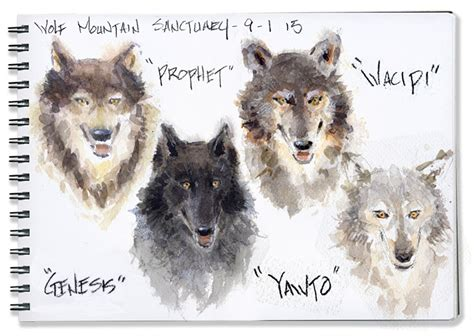 r 174 slideshow sketches with wolves artist mike