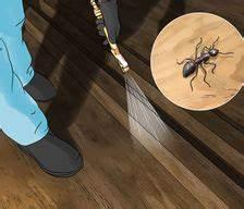 Ameisenplage Im Haus : haus garten wikihow ~ Orissabook.com Haus und Dekorationen