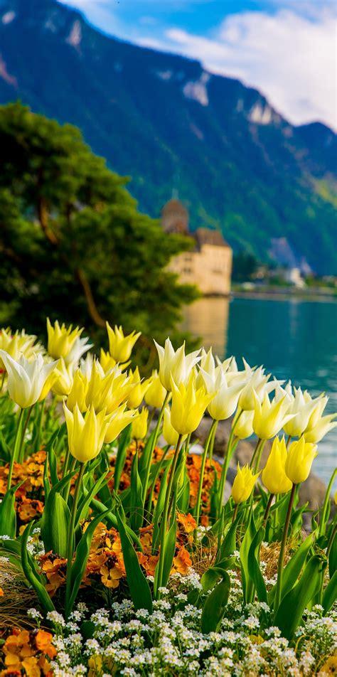 Geneva Flowers 17 flowers on lake geneva with swiss alps montreux