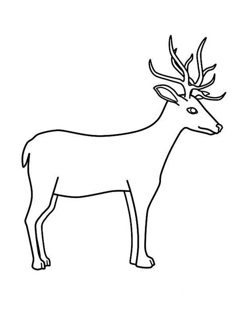 Best Deer Coloring Pages Ideas And Images On Bing Find What You