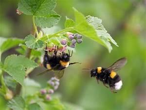 Was Vertreibt Wespen : 7 lebensmittel die l stige insekten vertreiben eat smarter ~ Articles-book.com Haus und Dekorationen