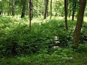 Photos Of Russia  Forest And Undergrowth