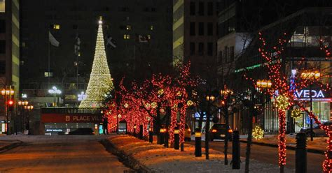 montreals official christmas tree   set   place