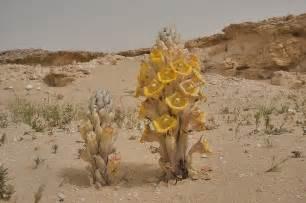 desert plants desert plants in doha search in pictures