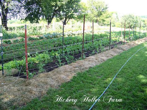hickery holler farm no till gardening and heavy mulch