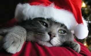 15 santa claus cats kitty bloger