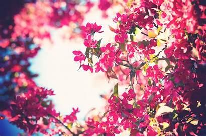 Flowers Bloom Pink Bokeh Blooming Flower Weheartit