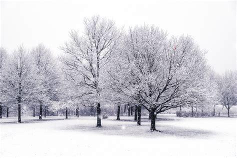 snow trees snow trees rasmus sonderborg flickr