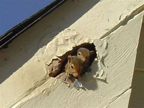 Common Squirrels Species Living The Plus