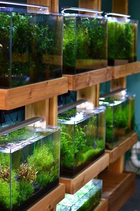 Aquascaping Supplies by Aquarium Zen Seattle Tropical Fish Store Aquatic Plants