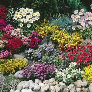 Couvre Sol Vivace : plante couvre sol un tableau de couleurs naturelles dans ~ Premium-room.com Idées de Décoration