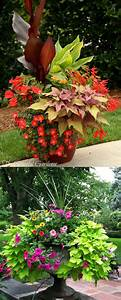 Flower Recipes For Containers - Best Flowers And Rose 2018