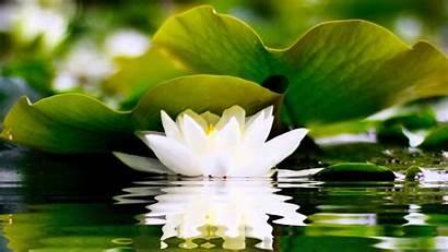 Zen Yoga Wallpaperaccess Wallpapers Buddhism Buddhist Buddha