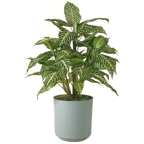 in plant zebra plant