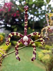 Weird Orchids