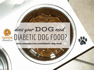 36 best dog nutrition images on pinterest dog feeding With diabetic dog treats