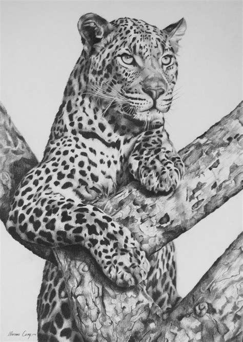 adult leopard  treepencil  board leopard drawing