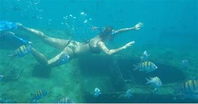 Barbados Snorkel Bridgetown Wrecks Turtles Getyourguide Tour