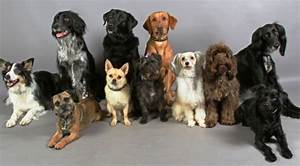 What Impact Has Recent Inbreeding Had On The Genetic Diversity Of Domestic Dogs