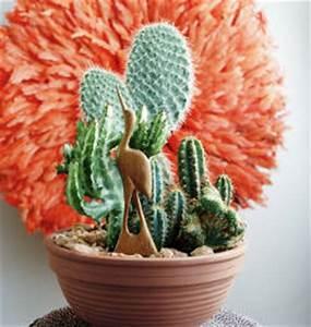 Entretien Plantes Grasses : cactus et plantes grasses 4 vari t s faciles vivre ~ Melissatoandfro.com Idées de Décoration