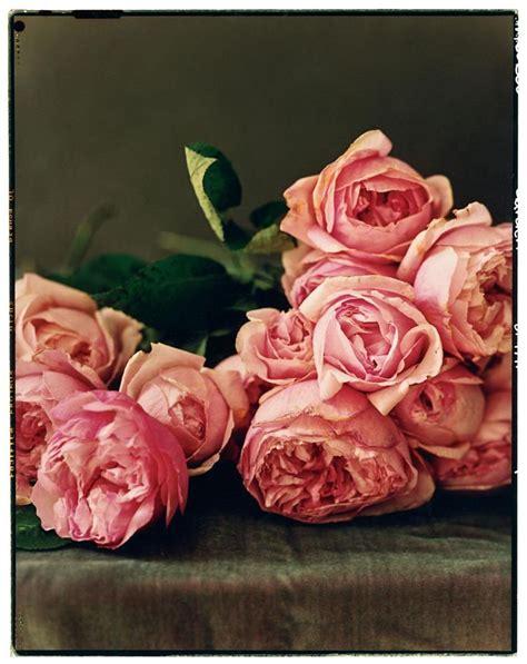 david garden roses david austin garden roses garden pinterest