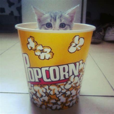 can cats eat salt