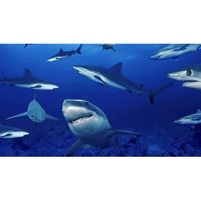 Shark Tank LessonsMaster Internet Marketing with Loretta