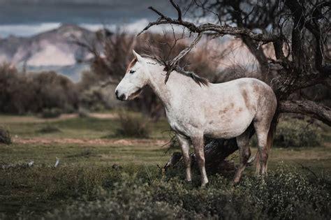 horse leave horses alone monteleone doria rocca legends unattended leaving advice photographer bare near tree