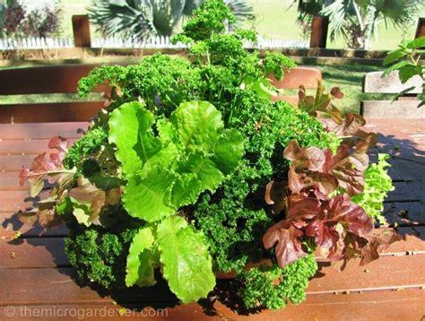 6 Tips For Abundant Edible Container Gardens The Micro