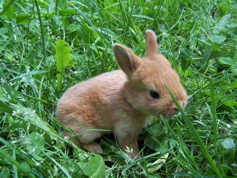 baby bunnies day  born     mama bunny