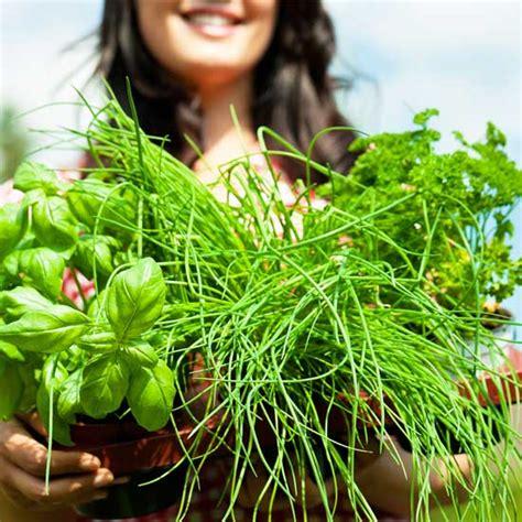 How To Start A Vertical Garden by How To Start A Garden And It Greenstalk Vertical