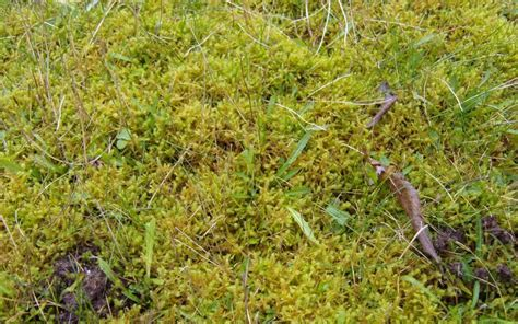 How To Rake Out Moss From Your Lawn