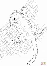 Glider Sugar Coloring Possum Pages Drawing Beanie Boo Clipart Drawings Printable Line Template Supercoloring Getdrawings Cliparts Clip Sketch Silhouettes Paper sketch template