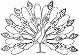 Peacock Coloring Pages Printable Peacocks Colour Drawing Bird Birds Realistic Cartoon Outline Drawings Line sketch template
